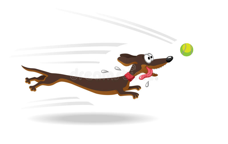 Dachshund dog running for tennis ball. vector illustration