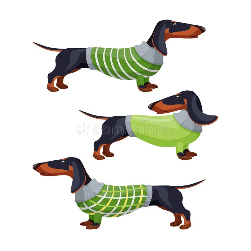 Dachshund dogs in green sweater side view vector illustration royalty free illustration
