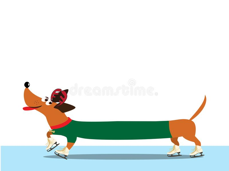 Dachshund dressed in green pullover skating along the ice rink. vector illustration