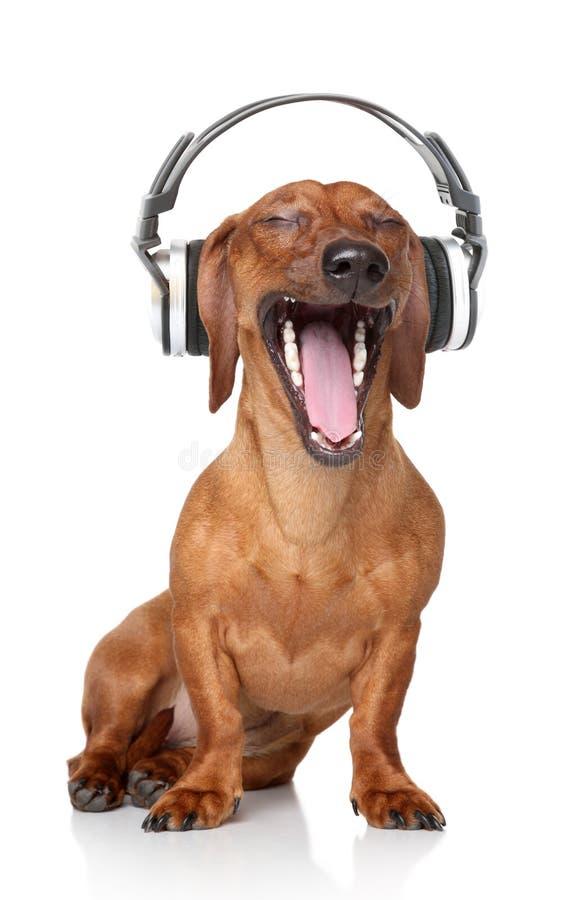 Dachshund hören Musik lizenzfreie stockbilder