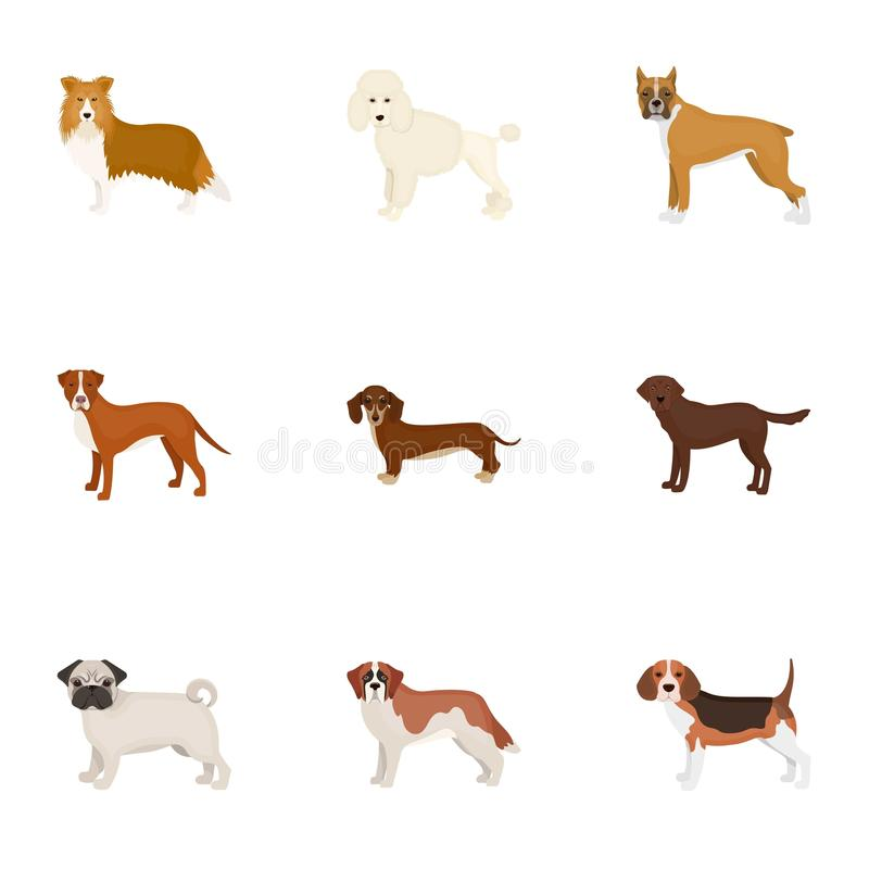 Download Dachshund Laika Poodle And Other Web Icon In Cartoon StyleBoxer