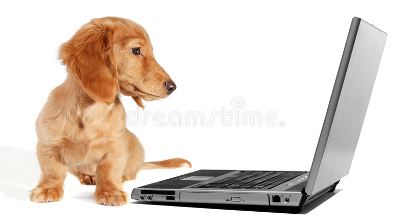 Download Dachshund puppy stock image. Image of notebook, communications - 6458751
