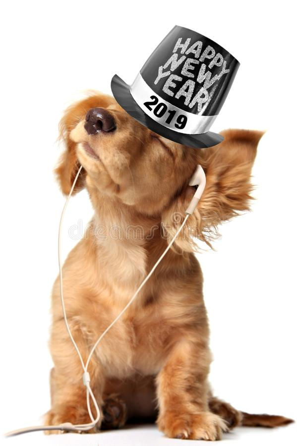 Dachshund puppy listening to music on earbuds and wearing a 2019 Happy New Year top hat stock photos