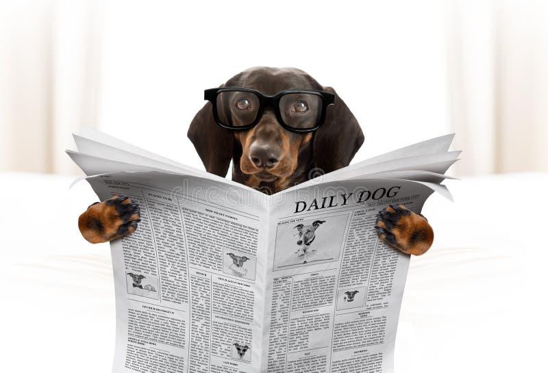 Dog reading newspaper royalty free stock photo