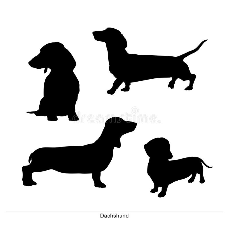 dachshund Taxa σκυλί μακρύ dachshund Taxa σκυλί μακρύ Τα σκυλιά είναι στάση ελεύθερη απεικόνιση δικαιώματος