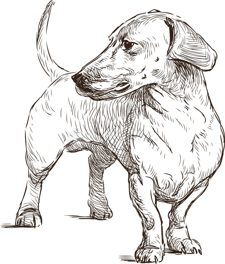 dachshund stock vector illustration of standing hand