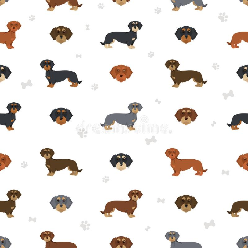 Free Dachshund Wire Haired Clipart. Different Poses, Coat Colors Set Stock Images - 215227054