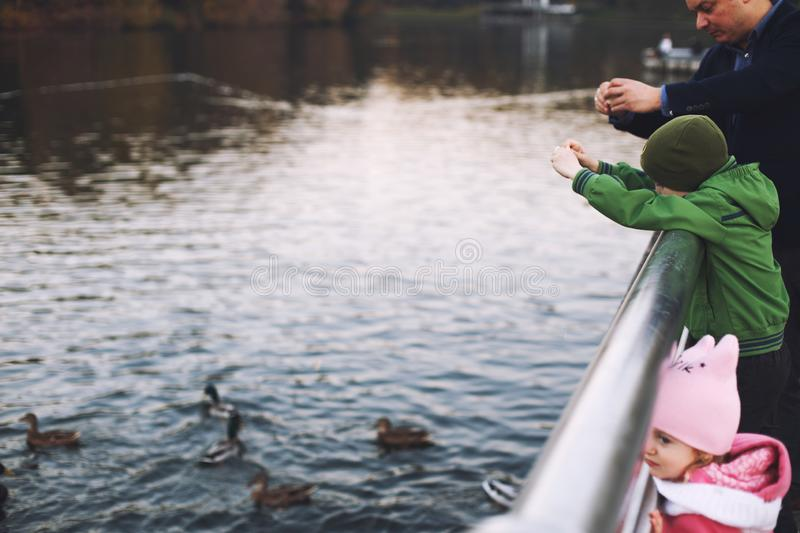 Dad with children walks and feeds the ducks stock photo