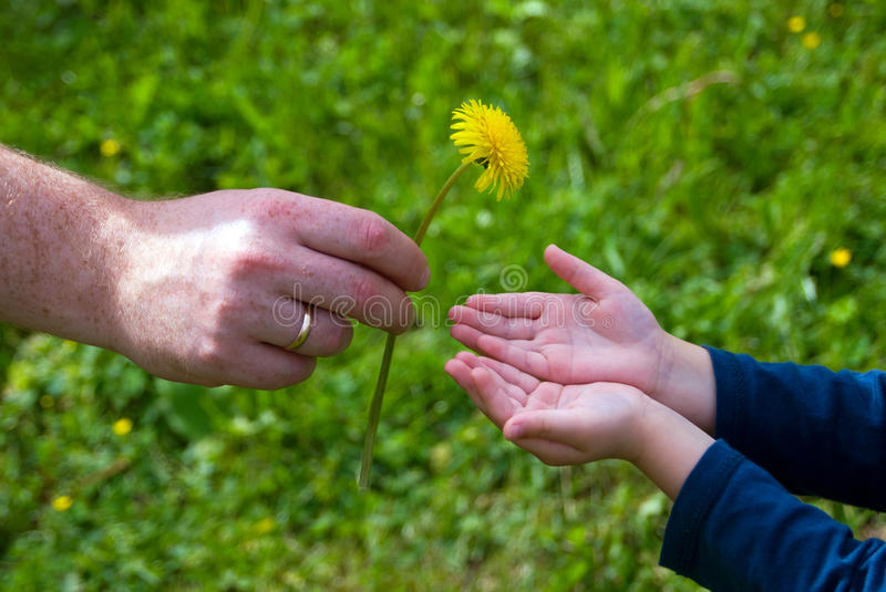 Dad gives his son a dandelion royalty free stock images