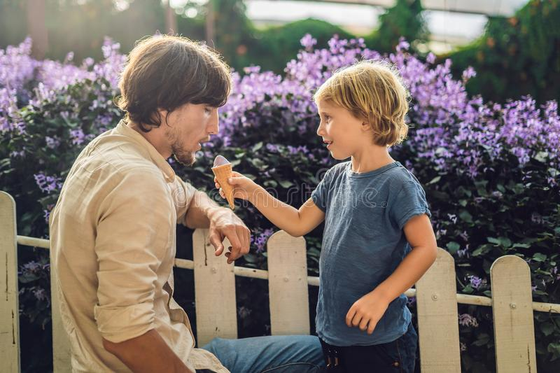 Dad and son eating lavender ice cream on the background of a lav. Ender field royalty free stock image