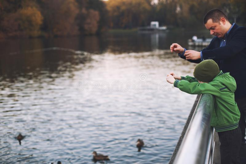 Dad and son feed ducks stock photography