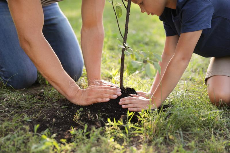 Dad and son planting tree in park, closeup royalty free stock photos