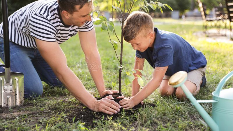 Dad and son planting tree in park stock photography