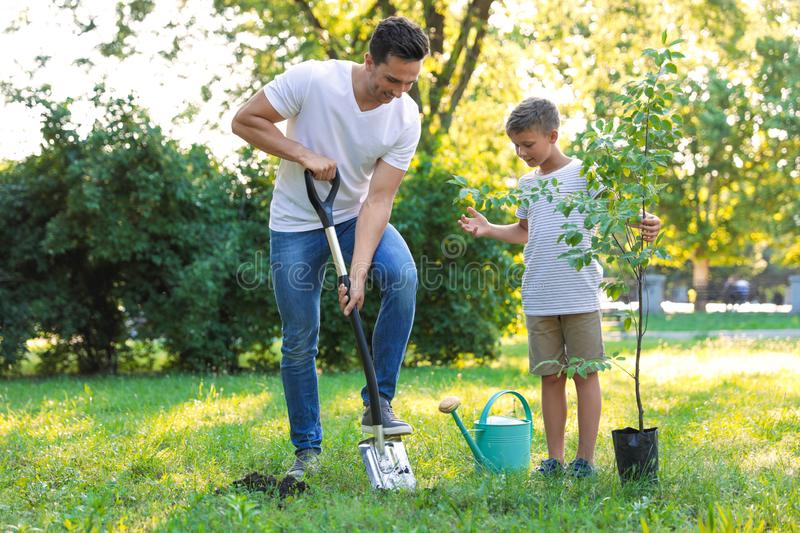 Dad and son planting tree in park royalty free stock image