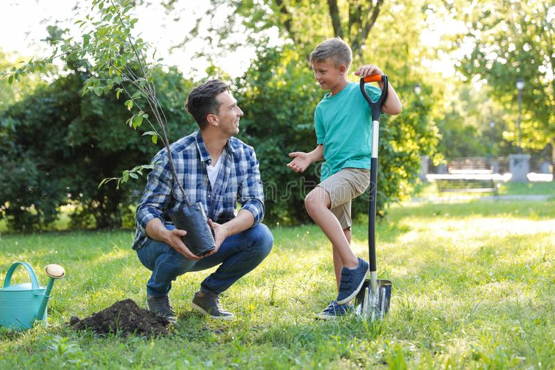 Dad and son planting tree on sunny day royalty free stock photography
