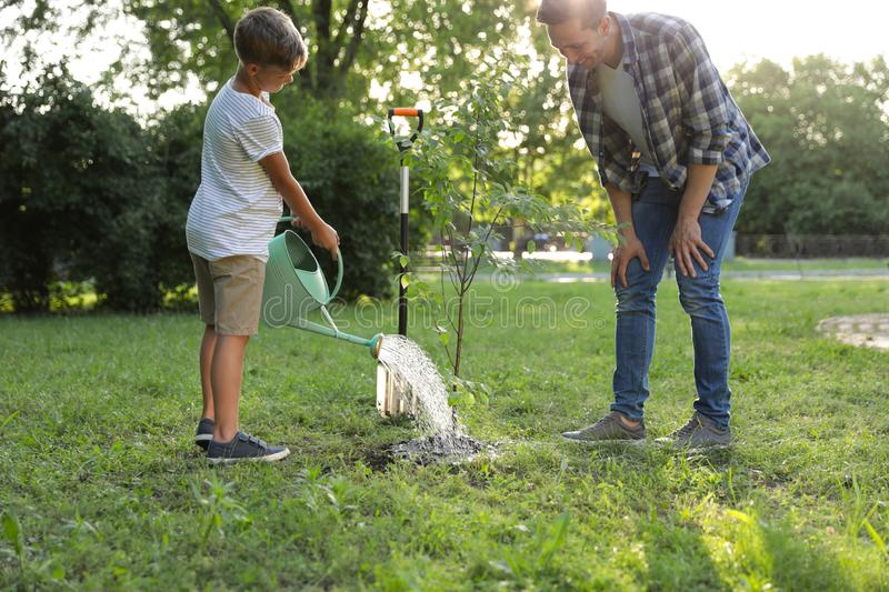 Dad and son watering tree in park royalty free stock images
