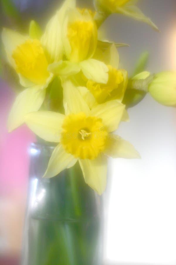 daddofil λουλούδια στοκ εικόνα