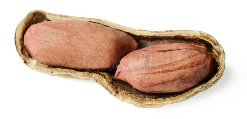 Dadi delle arachidi nelle coperture rotte Fondo isolato bianco Primo piano Macro Vista da sopra fotografia stock libera da diritti