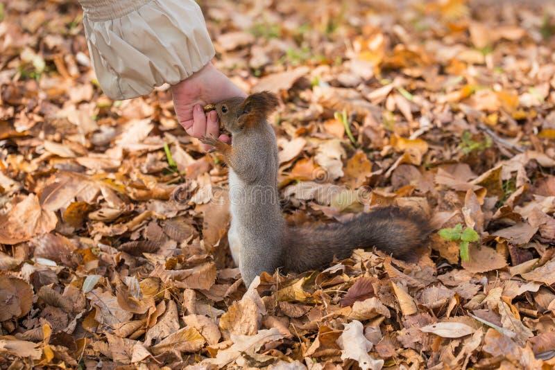 Dadi per lo scoiattolo immagine stock libera da diritti