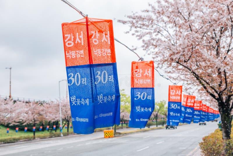 Daejeo Nakdonggang czereśniowego okwitnięcia Ekologiczny Parkowy Nadrzeczny festiwal w Busan, Korea obraz royalty free