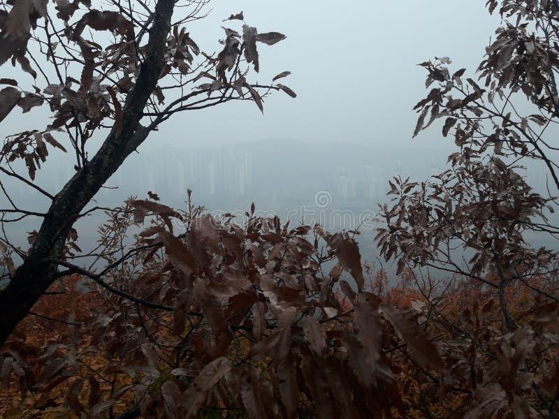Daejeon za drzewami i chmurami, bardzo przygnębiający miasto widok obraz stock