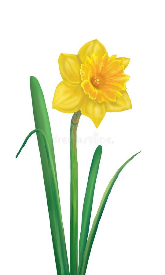 Daffodil Żółty kwiat ilustracja wektor