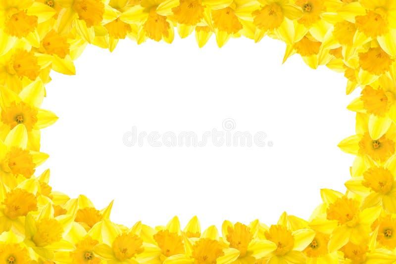 daffodil граници иллюстрация вектора