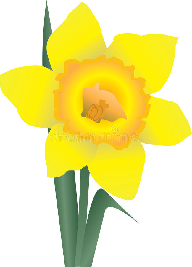 Daffodil ilustração royalty free