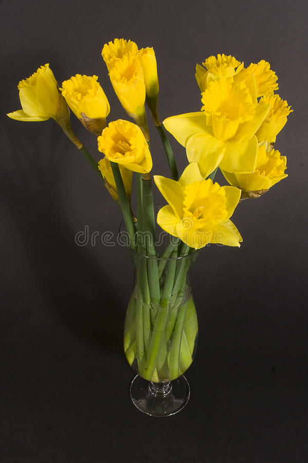 Download Daffodil. stock photo. Image of floral, fresh, spring - 13772266