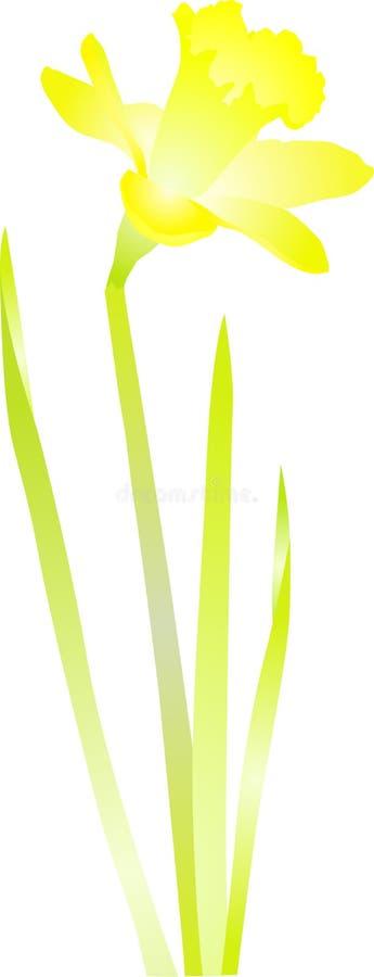 Daffodil amarelo ilustração stock