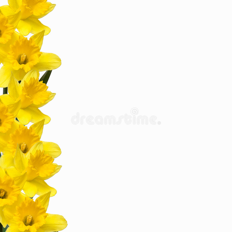Free Daffodil Border Royalty Free Stock Image - 692656
