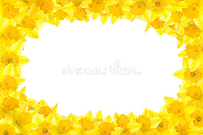 Daffodil Border vector illustration