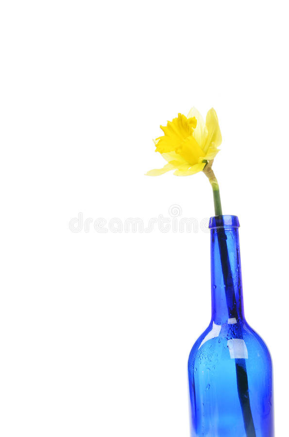 Daffodil in a bottle stock photo