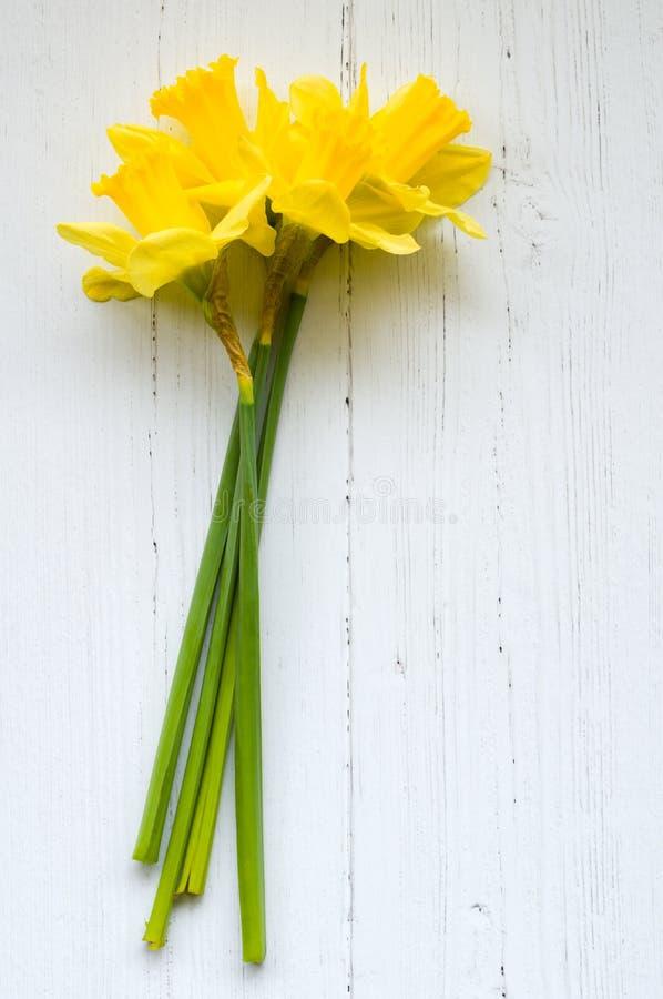 Daffodil - daffadowndilly, narciso e jonquil immagine stock libera da diritti