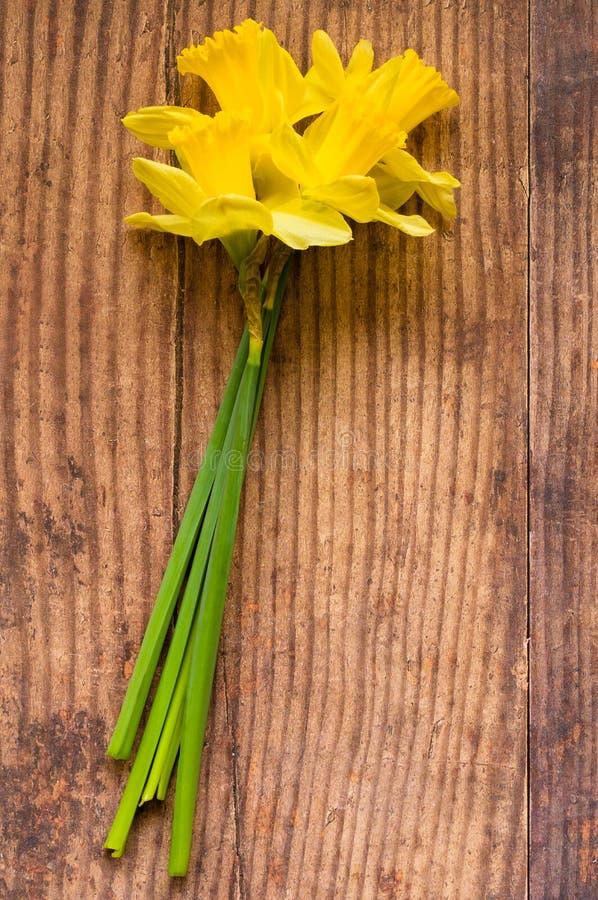 Daffodil - daffadowndilly, narciso e jonquil fotografia stock libera da diritti