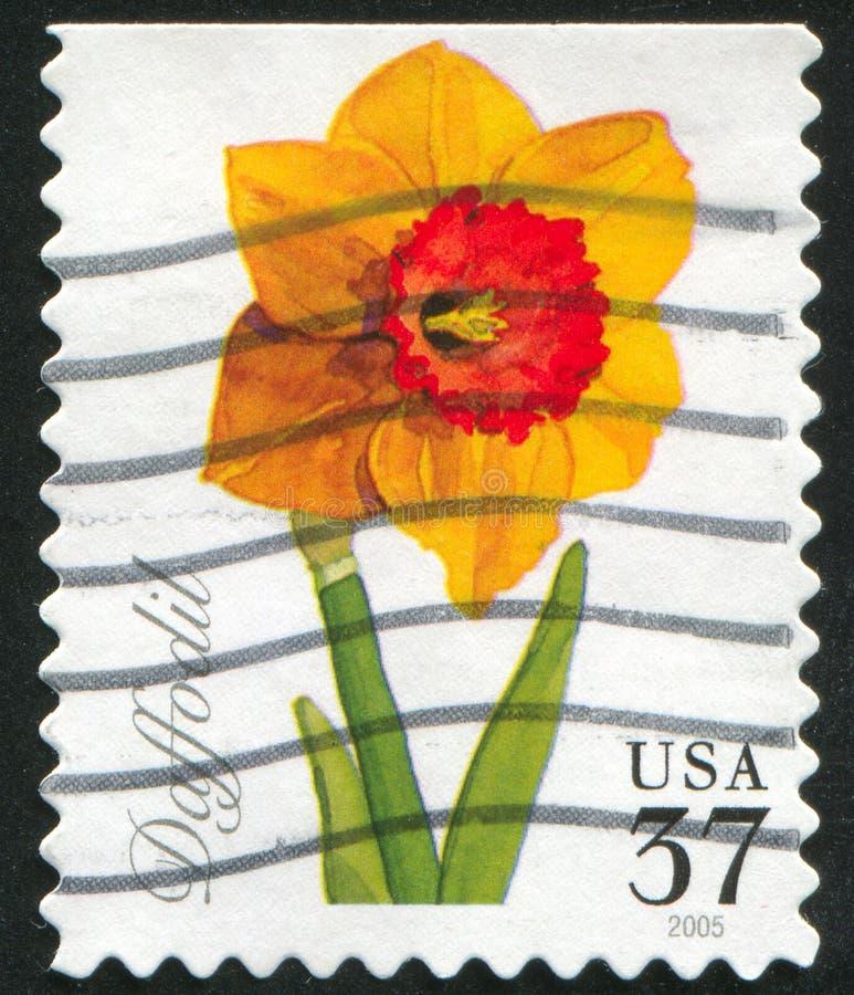 Daffodil ilustração stock