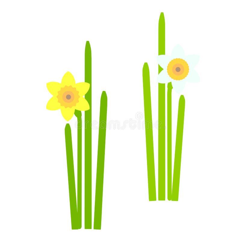 Daffodil Fiori gialli e arancio della molla, foglie verdi su fondo bianco illustrazione di stock