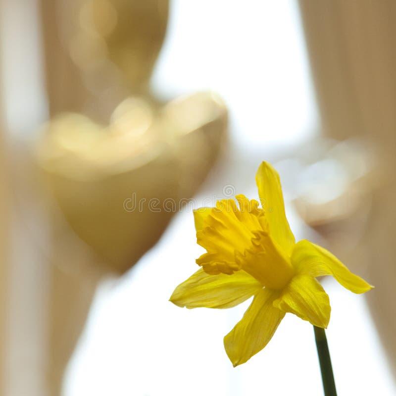 Daffodil i serca balony zdjęcie stock