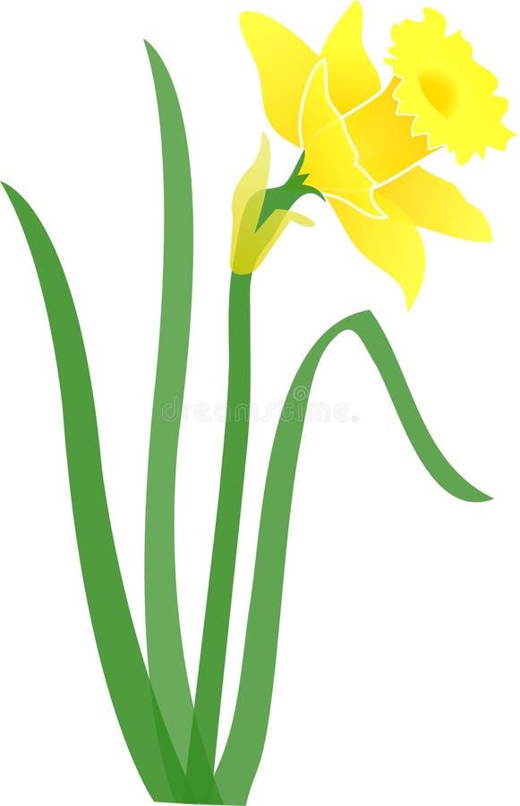 Daffodil-jonquil/eps ilustração do vetor
