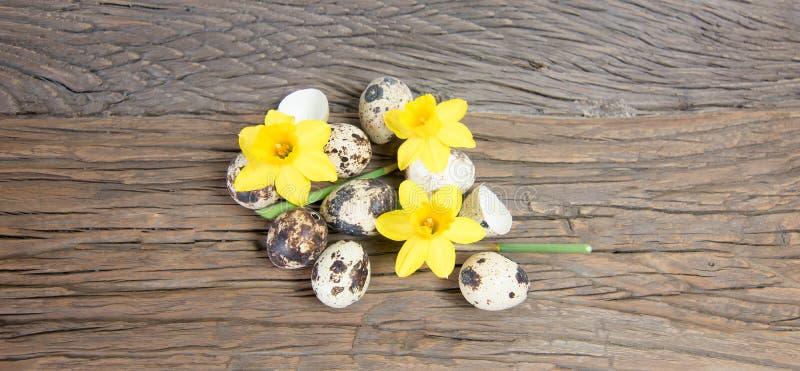 Daffodil kwiaty i przepiórek jajka fotografia stock