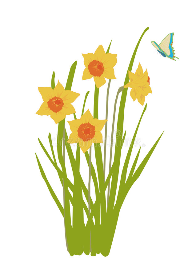 Download Daffodil Plant In Bloom With B Stock Vector - Illustration of blossom, isolated: 3405347