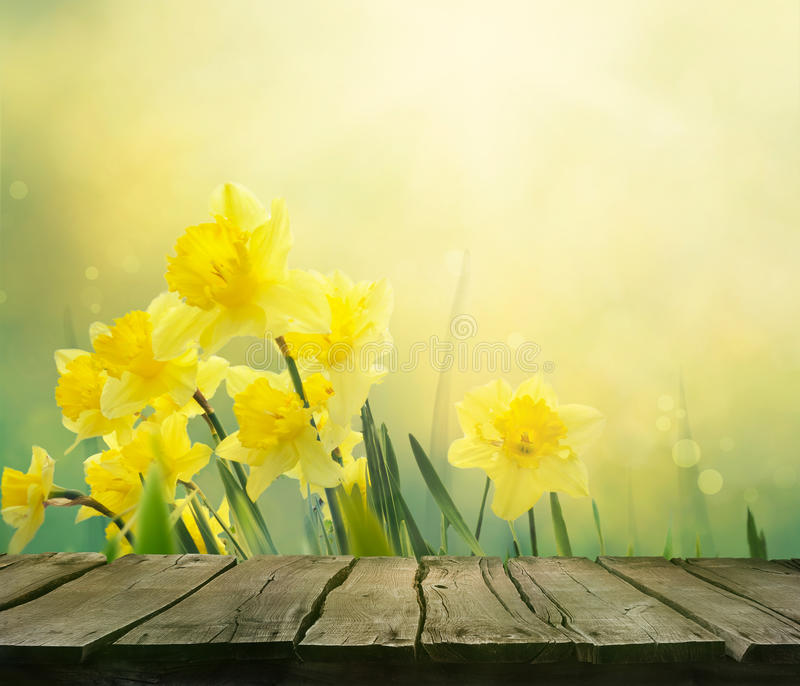 Daffodil Saint David's Day PNG, Clipart, Amaryllis Family, Animation, Clip,  Cut Flowers, Daffodil Free PNG Download