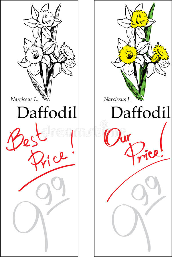 Daffodil - Two Price Tags vector illustration