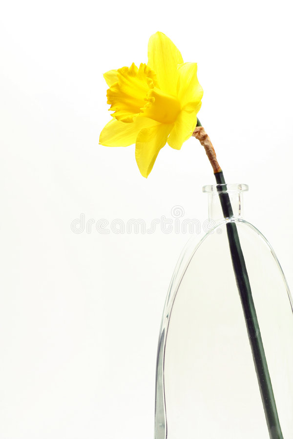 Daffodill display. royalty free stock images