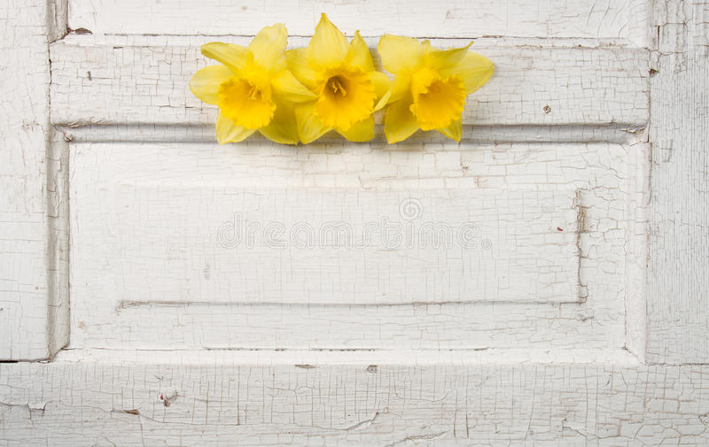 Daffodill on a vintage door stock photography