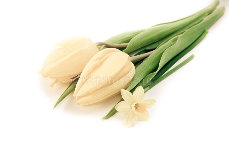 daffodils τουλίπες στοκ εικόνες
