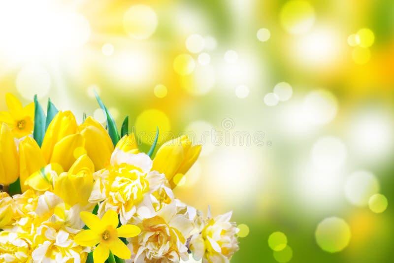 Daffodils, τουλίπες, bokeh στοκ εικόνες