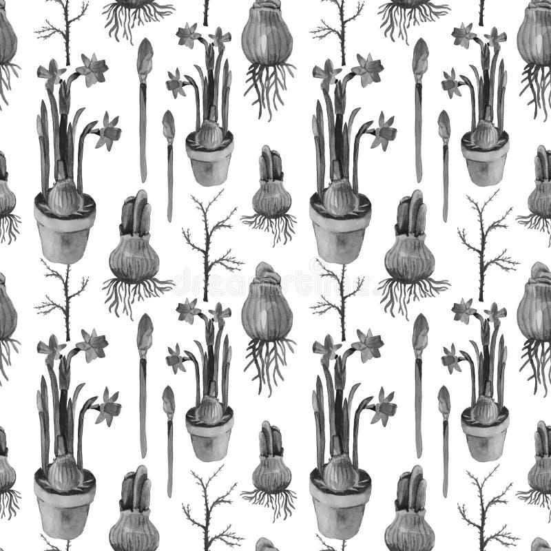 Daffodils безшовной картины акварели черно-белые иллюстрация вектора