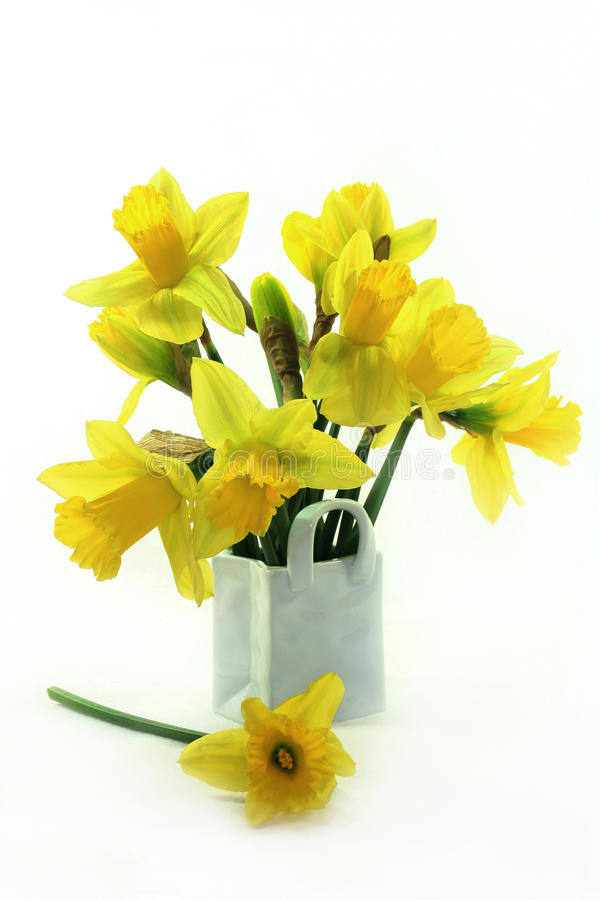 Daffodils. A bouquet of daffodils on a white background stock images