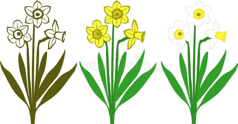 Download Daffodils ilustracja wektor. Obraz złożonej z natura - 30398118